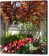 Tulips By Dappled Fence Acrylic Print