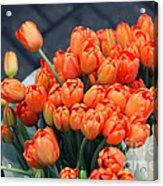Tulips Acrylic Print by Leslie Leda
