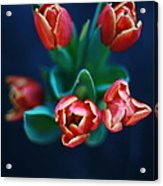 Tulips On Black Acrylic Print