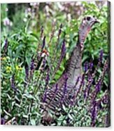 Turkey Flowers Acrylic Print
