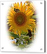 Turn Your Face To The Sun Acrylic Print