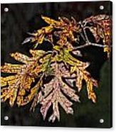 Turning Leaves Acrylic Print