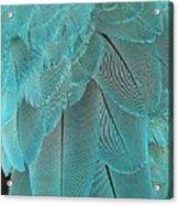 Turquoise Blue Feathers Acrylic Print
