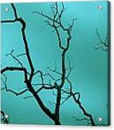 Turquoise Sky Acrylic Print