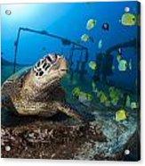 Turtle And Sealife Acrylic Print