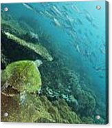 Turtle Eye View Acrylic Print