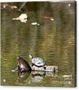 Turtle Print Acrylic Print