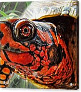 Turtle Smile Acrylic Print