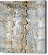 Turtle Spine Acrylic Print