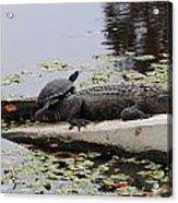 Turtle Takes A Gator Ride Acrylic Print