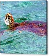 Turtle Time  Acrylic Print
