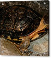 Turtle Time On The Rocks Acrylic Print
