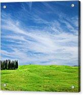 Tuscany Cypress Acrylic Print