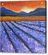 Tuscany Lavender Field Acrylic Print