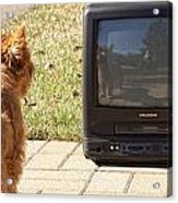 Tv Watching Dog Acrylic Print by Susan Stone
