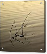 Twigs Breaking The Calm Surface Of The Lake On Sunset Acrylic Print