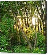 Twilight In The Woods Acrylic Print