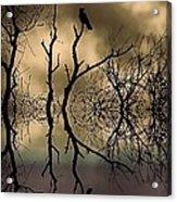 Twilight Acrylic Print by Sharon Lisa Clarke