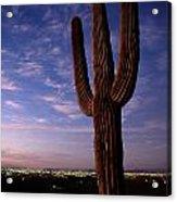 Twilight View Of A Saguaro Cactus Acrylic Print