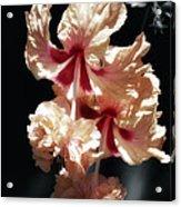 Twin Beauty Hibiscus Acrylic Print