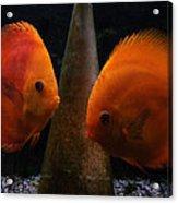 Twin Friends Malboro Fish  Acrylic Print