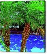 Twin Palms 2 Acrylic Print