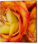 Twin Yellow Roses Acrylic Print