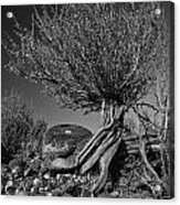 Twisted Beauty - Bw Acrylic Print by Christopher Holmes