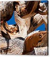Twisted Bristlecone Pine Acrylic Print