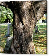 Twisted Tree Acrylic Print by Janice Paige Chow