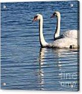 Two Beautiful Swans Acrylic Print by Sabrina L Ryan