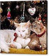 Two Cats At Christmas Acrylic Print