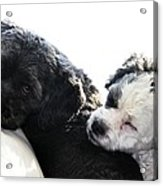 Two Cute Acrylic Print by Larry Ricker