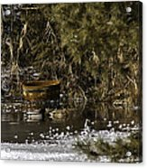 Two Ducks And A Tub Square Acrylic Print