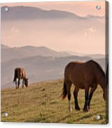Two Horses Grazing On Mountain Top In Early Mornin Acrylic Print by Christiana Stawski