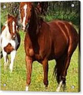 Two Horses In Summer Acrylic Print