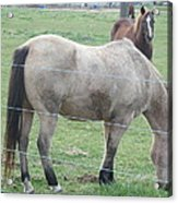 Two Horses Up Front Acrylic Print