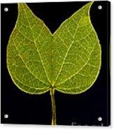 Two Lobed Leaf Acrylic Print