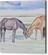 Two Mares Acrylic Print