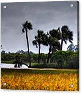Two Mile Palms Acrylic Print