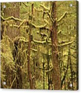 Waltzing In The Rainforest Acrylic Print