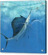 Two Of A Kind Sailfish Acrylic Print