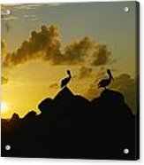 Two Pelicans Perched On Rocks Acrylic Print