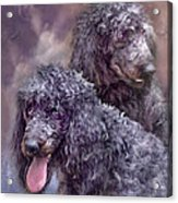 Two Poodles Acrylic Print