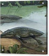 Two Prehistoric Platyoposaurus Acrylic Print