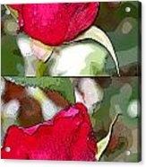 Two Rose Buds Acrylic Print