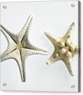 Two Thorny Star Starfish On White Background Acrylic Print