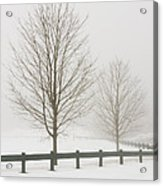 Two Trees And Fence In Winter Fog Acrylic Print