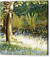 Sunlit Bluebells Llanina Ceredigion Acrylic Print