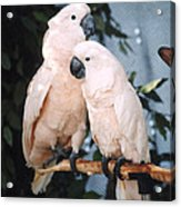 Two Very Good Friends Acrylic Print